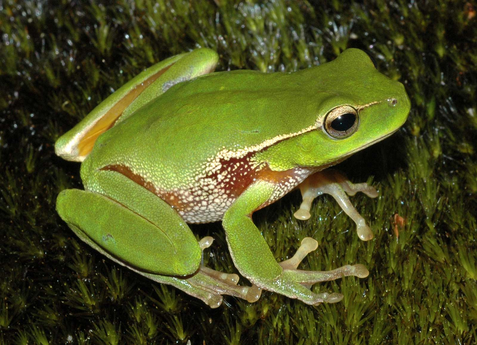 Frogs are amphibians, which comes from the Greek language and means