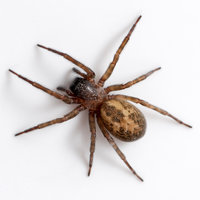 Spiders are not insects Because they have some characteristics that are different from insects.
